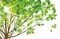 Zasady wycinki drzew